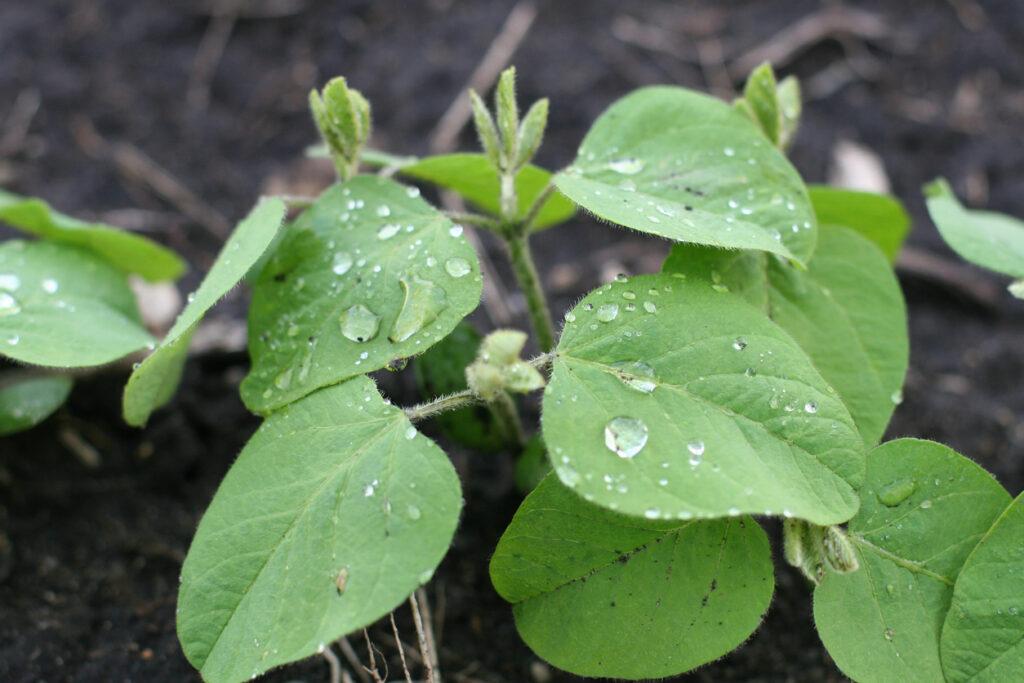Estudo de clima como fator para aumentar a produtividade da lavoura de soja